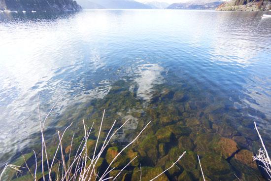 芦ノ湖遊覧船乗り場から水中を撮った写真