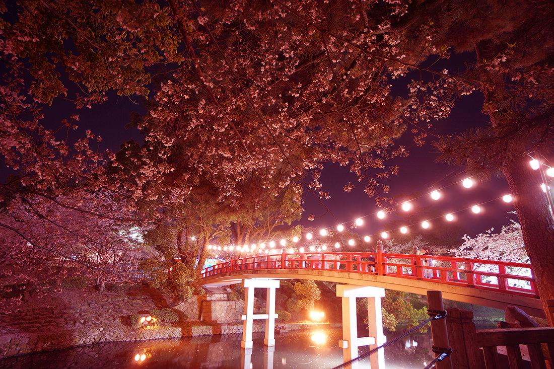 岡崎公園の龍城堀にかかる赤い神橋と夜桜