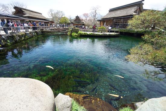 忍野の中池
