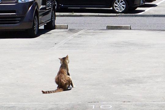駐車場で後ろを向いている猫の画像