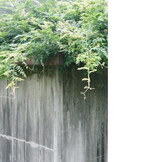 植物に覆われたコンクリートの建物