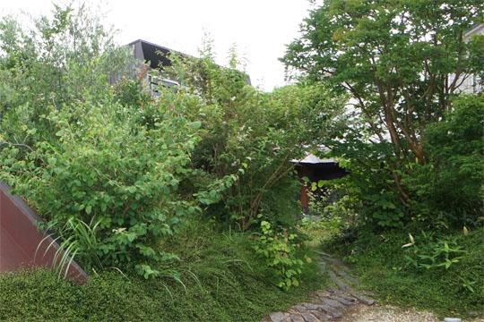 樹木に覆われたカフェの外観