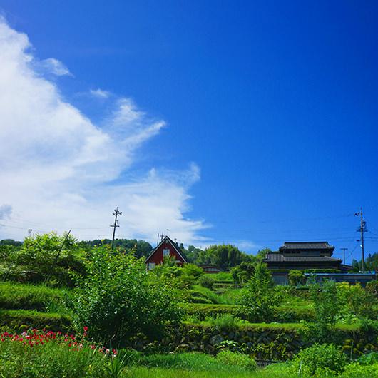 実家の裏庭からの風景画像