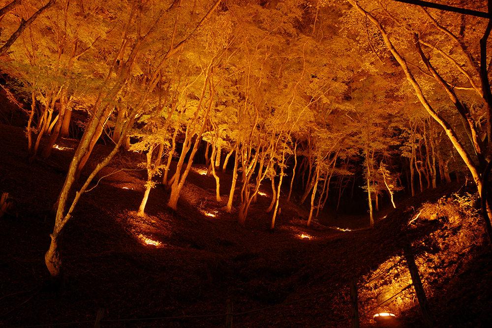 香嵐渓の紅葉 夜間ライトアップの画像