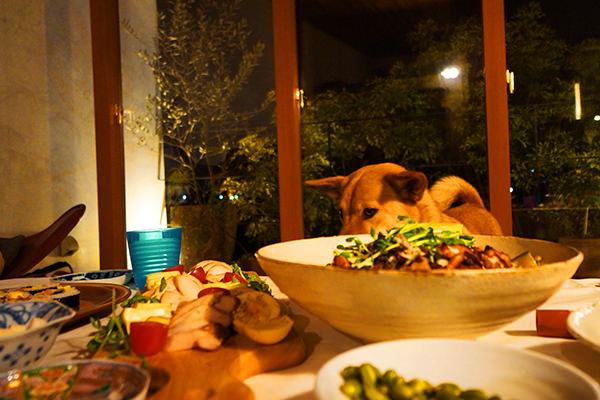 料理を見る犬の画像