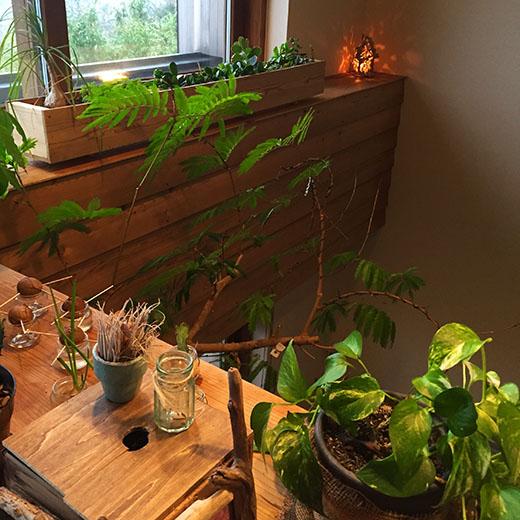 吹抜けと観葉植物の画像