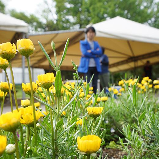 広角レンズで背景をボカして撮った黄色い花の写真