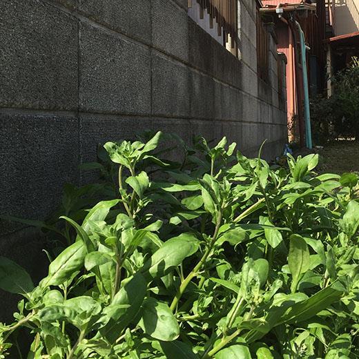 敷地境界線上のブロック塀