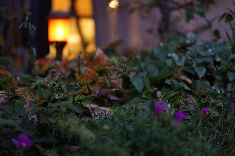 夕暮れの裏庭の写真