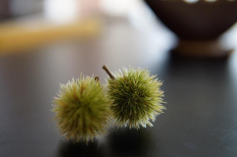 若い毬栗の写真