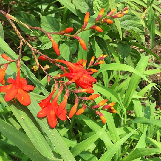 赤い花の写真