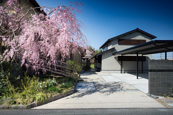そとん壁の外壁と枝垂桜の写真 和モダン住宅